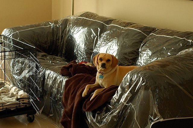 Plastic Couch Cover For Pets - Home Furniture Design